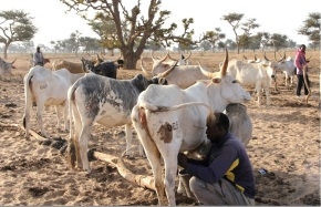 African Dairy Genetic Gains Program: Innovative private-public partnership for sustainable dairy productivity in Ethiopia andTanzania